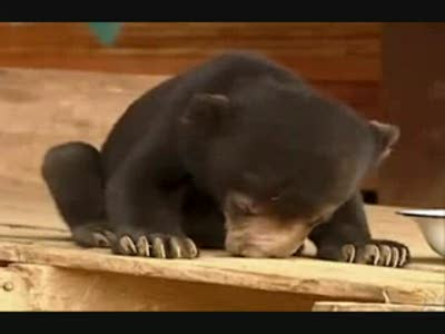 Bear_need_sleep