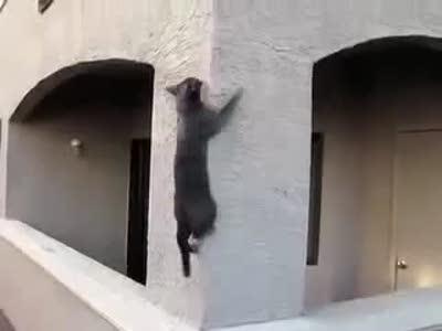 Кот - альпинист