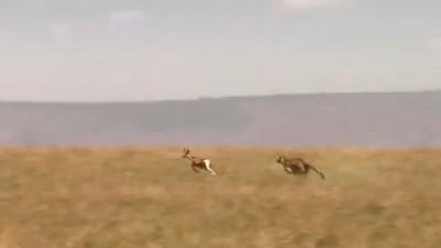 Skechers - GOrun 2 -- Man vs Cheetah Big Game Commercial