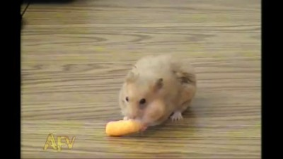 Cheese Doodle Hamster Hero - AFV