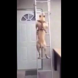 Собака поднялась по лестнице на крышу