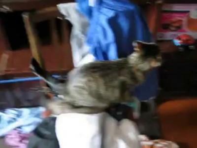 Хорек и кот