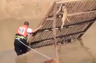 спас собакена