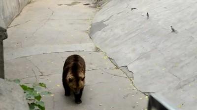 (видео)Медведи любят морковку!