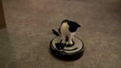 Коты и пылесосы