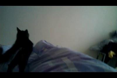 Котейки пришли будить меня 31 декабря!