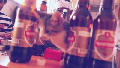 Niga_ пиво, семечки
