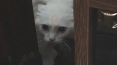 Кошка говорит УХОДИ УХОДИ УХОДИ