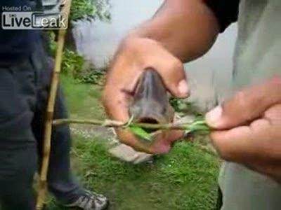 Веселая рыбка