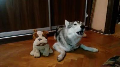 Мой собакен запел