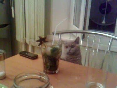 котя пьет мохито!