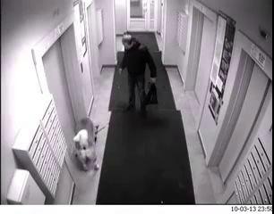 Собака повесилась на дверях лифта (ТЯЖЕЛОЕ ВИДЕО)