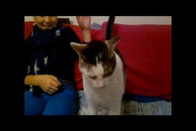 Управляемый кот