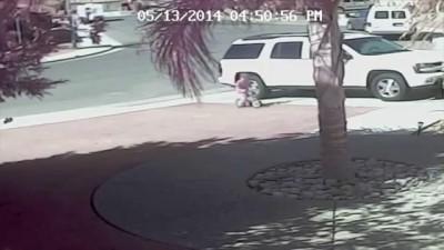 Кот спас мальчика от собаки!