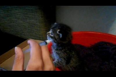Мелкий котенок