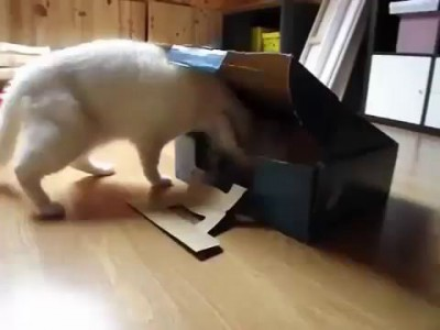 Cats with box