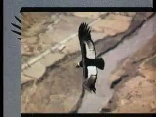 los indios tabajras-el condor pasa