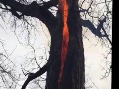 Дерево в огне