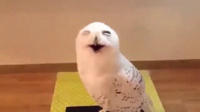 Укуренная сова