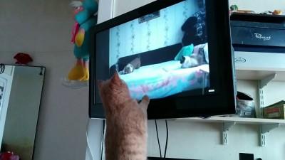 Филя и ТВ