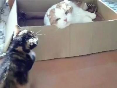 Кот троллит котенка.