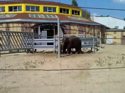 Слоны в Ростовском зоопарке