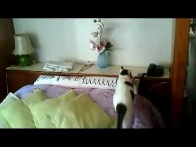 Кот разговаривает по телефону!