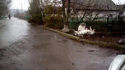 Индюки сепаратисты - YouTube [720p]