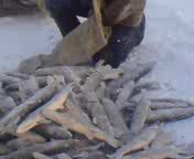 Рыбалка на Обской губе. ЯНАО