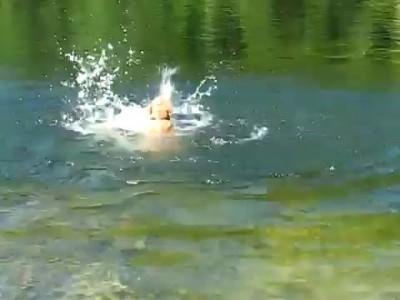 Умеет плавать, но кое как