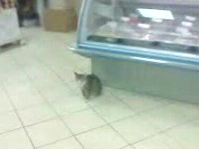 Кот в универсаме часть два