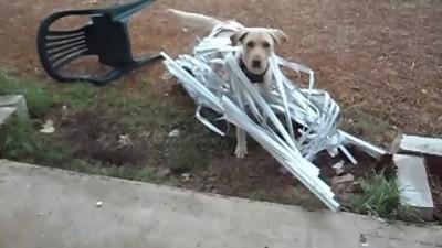 собакен