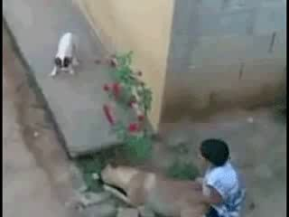 FUNNY Arab Boy and Dog