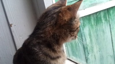 Кошка тяфкает