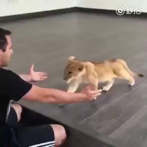 mini-lion