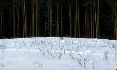 Условный знак - Волк