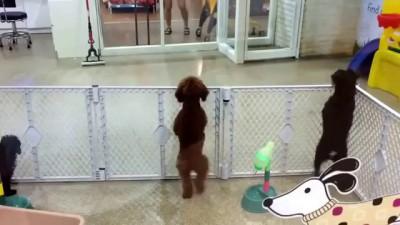 пес танцор