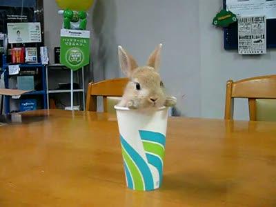 Кролики двойняшки
