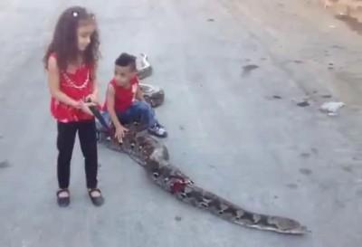 Домашние животные палестинских детей ...