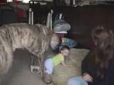 Пёс напал на ребёнка