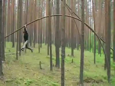 Древесный прыгун