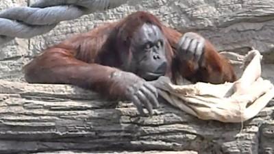 Зоопарк 2011
