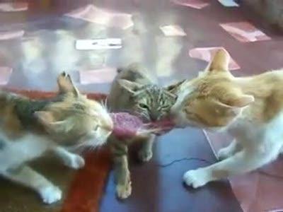 3 кота, 1 стейк