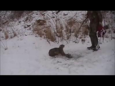 Мужики спасли рысь