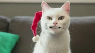 Джингбэллс от кота