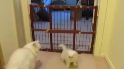 Мама-кошка учит перелезать через стенку