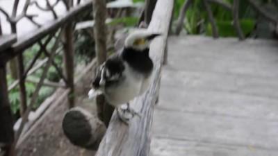 Упоротая птичка