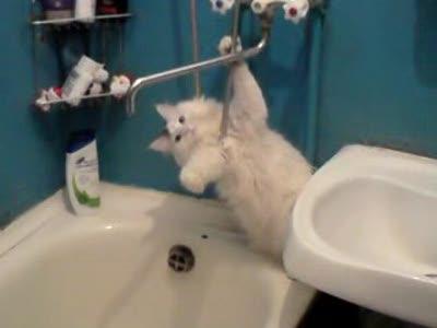 Котэ в ванной