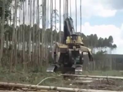 Вырубка леса вдоль ЛЭП