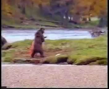Медведь дерется с человеком за рыбу
